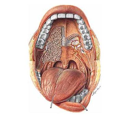 5 ефикасни билки за здравето на устната кухина - For Life